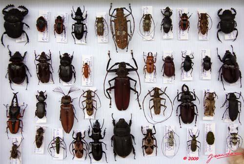 La pr paration - Boite a insecte ...